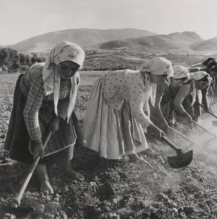 Women working in the cotton fields near Aliartos, Greece, 18 june 1946.;