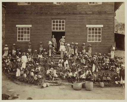 Tea plantation workers, Ceylon, c 1870.