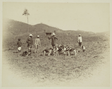 Men with hounds before a hunt, Ceylon, c 1870.