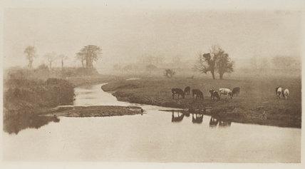 Cattle grazing, c 1893.