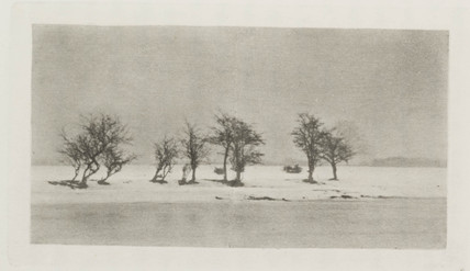 'Gnarled Thorn Trees', 1895.