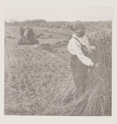 'Shocking Corn (Norfolk Marshes)', 1888.