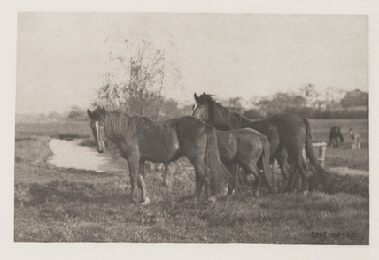 'Colts on a Norfolk Marsh', 1888.