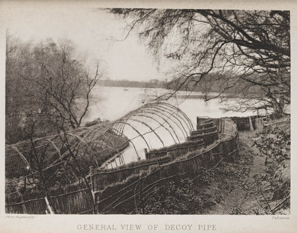 'General View of Decoy Pipe', 1883.