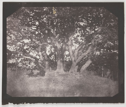 'Oak Tree', Carclew Park, Cornwall, August 1841.