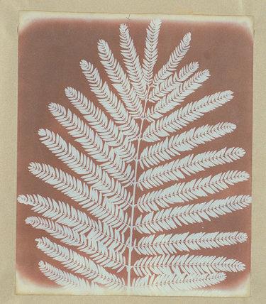 Botanical specimen, c 1841.