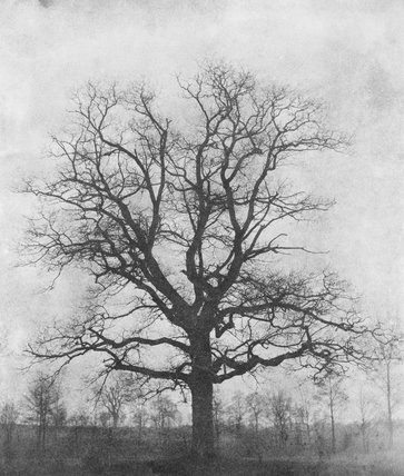 'Oak tree in winter', Lacock Abbey, c 1843.