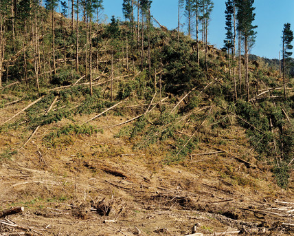 Commercial logging, New Zealand, 2001.