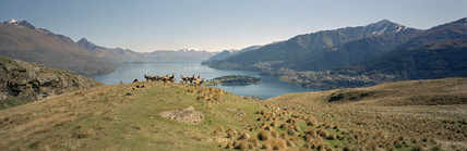 Deer farming above Queenstown, New Zealand, July 2001.