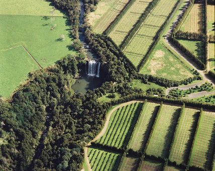 Orchards, Kerikeri, New Zealand, August 1986.