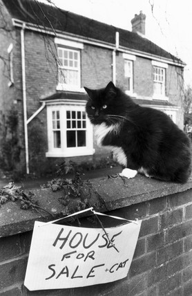 'House for Sale + Cat', February 1989.
