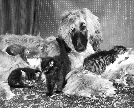 Dog and kittens, August 1976.