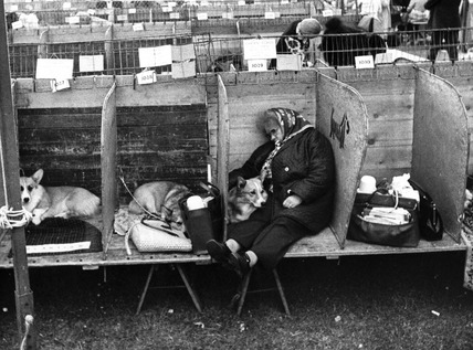 Resting at the Blackpool Dog Show, June 1976.
