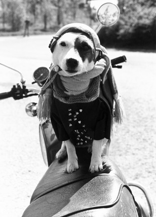 Dog on a motorbike, c 1980s.