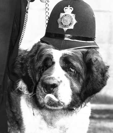 Dog wearing a policeman's helmet, March 1988.