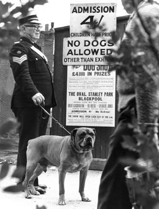 Dog not allowed in to dog show, June 1970.