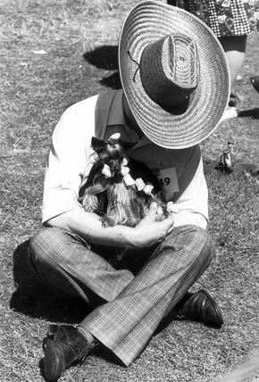 Yorkshire terrier in curlers, June 1976.