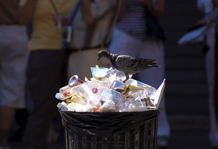 Pigeon on rubbish bin, Venice, Italy, 2007.