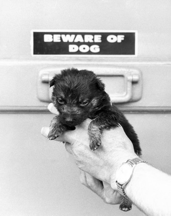 'Runt' of the litter, July 1983.