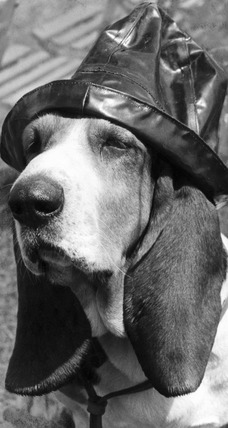 Dog wearing a sou'wester, June 1965.