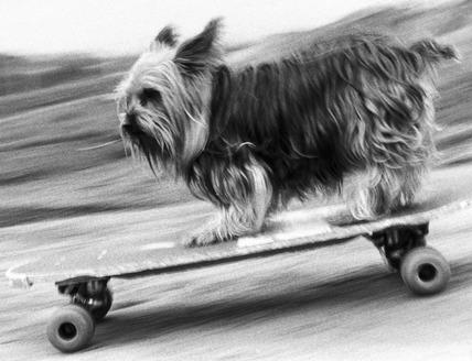 Skateboarding dog, January 1988.
