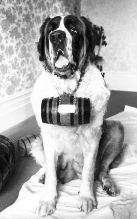 St Bernard dog, c 1980s.