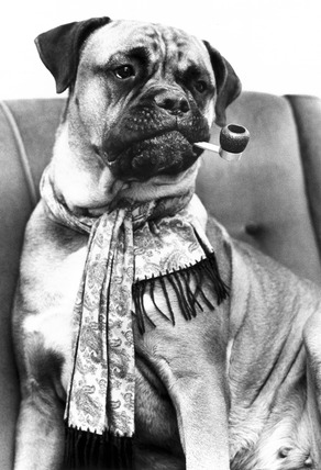 Dog smoking a pipe, February 1984.