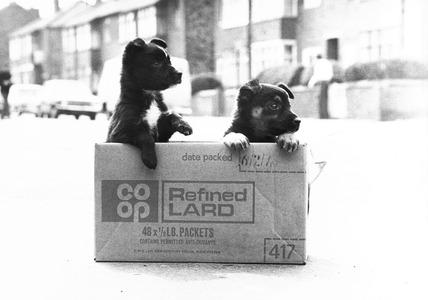 Abandoned puppies, May 1978.