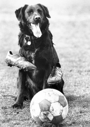 Dog with football, 1988.