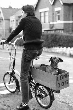 Dachshund on the back of a bike, February 1974.