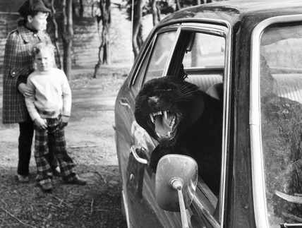 Black panther in a car, February 1973.