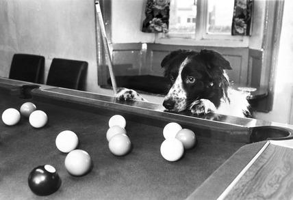Snooker-mad dog, January 1988.