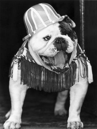 Bulldog with Union Jack hat, 1980s.