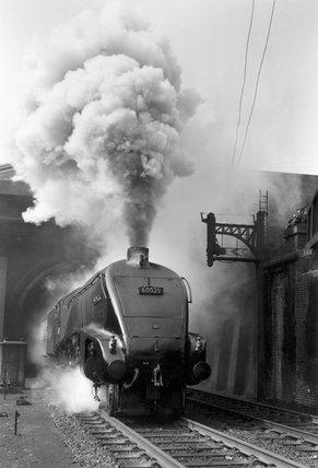 'Woodcock', A4 Class steam locomotive No 60029 c.1954