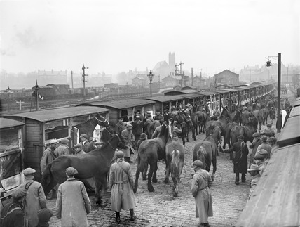 Horses at Ormskirk, 1914