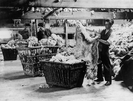 Sorting and grading the wool on sheep fleeces at a wool factory, 22 June 1934.