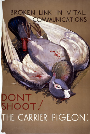 Don't Shoot the Carrier Pigeon