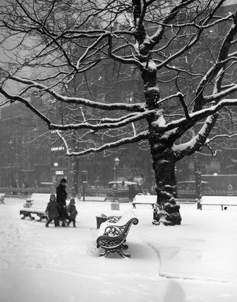 Trees and benches in snowy Leicester Square