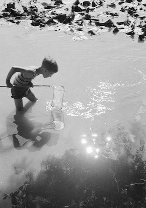 Young boy fishing with a net in a pond, c.1930s.