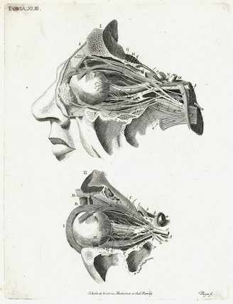 Print showing the anatomy of the human eye, Europe, c.1860.