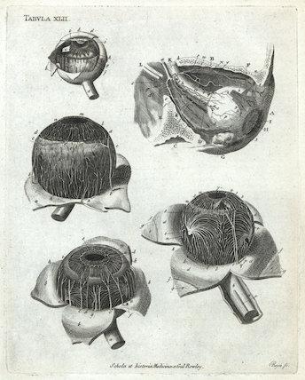 Print showing the anatomy of the human eye, Europe, c.1860.
