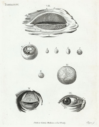 Print showing the human eye, eyelid and lens. Europe, c.1860.