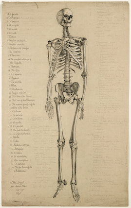 Anatomical drawing of a human skeleton, England, 1840.