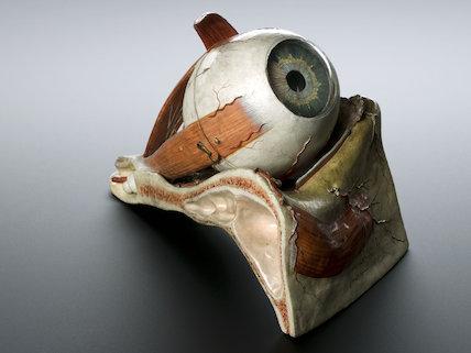 Model of human eye, by Louis Thomas Jérôme, France, 1870.