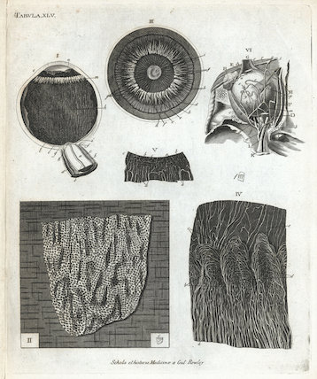 Print showing the internal structure of the human eye, Europe, 1851-1860