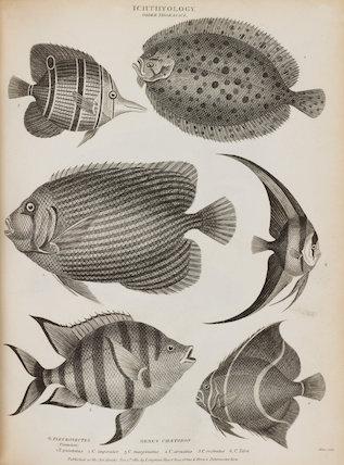 Illustrated with numerous engravings of Pleuronectes punctatus;Chaetodon imperator. C. marginatus. C. arcuatus. C. rostratus. C. Teria.