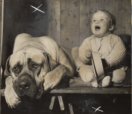 Mastiff and toddler at a dog show, 1957