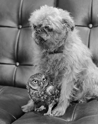 Dog with young owl