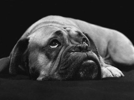 Waking dog