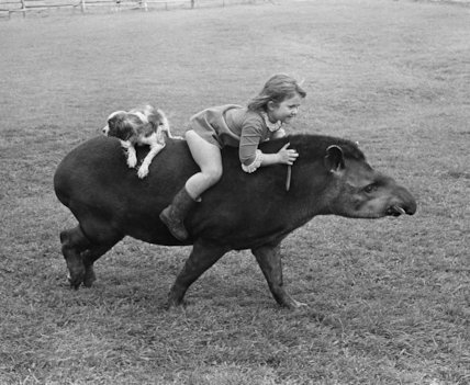 Girl and dog riding a tapir